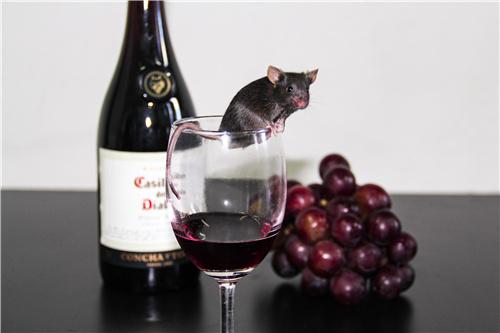 一种葡萄酒成分可用于可控肿瘤免疫治疗_精准-肿瘤-调控-