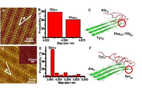 淀粉样蛋白结构解析研究获进展