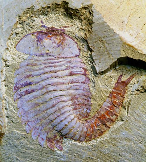 最古老动物脑构造化石纪录发表—论文—科学网
