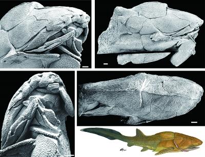 """《自然》:我古生物学家领衔发现""""古鱼新脸"""""""